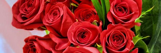news-roses-630x210